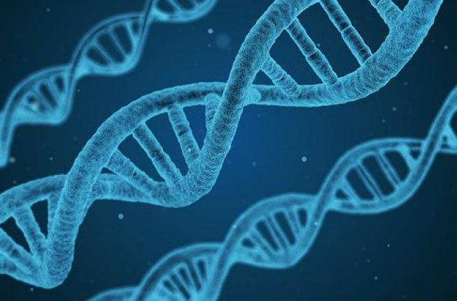 Collegamento a SCUOLA di SPECIALIZZAZIONE in GENETICA MEDICA